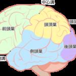 大人の脳も新しいニューロンを成長させる