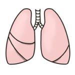 特発性肺線維症について