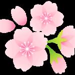弘前公園さくら開花宣言
