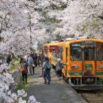 津軽鉄道(青森県)の桜