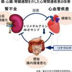 便秘薬で腎臓病の進行抑制と心血管疾患予防の可能性