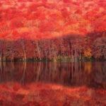 ネットの記事から 青森で撮影された『紅葉写真』 圧倒的な美しさに心奪われる